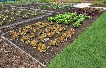 food_garden